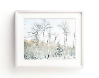 "landscape, winter, snow, trees, woodland, large art, large wall art, modern, minimalist, contemporary, wall art prints, art -""Winter Aspens"""