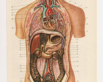 Anatomical Prints Medical Diagrams Illustration Anatomy Print old anatomic page human body Paper Ephemera upcycle recycle repurpose Vintage