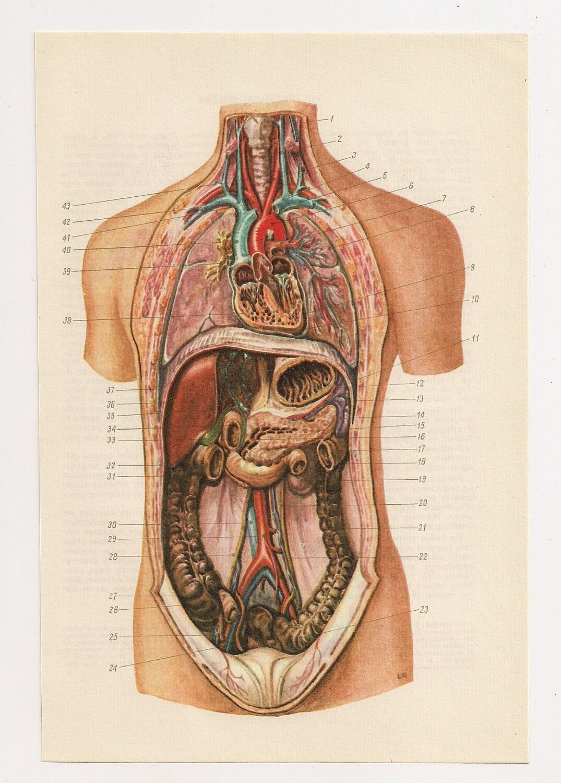 Anatómicos impresiones médicas diagramas ilustración anatomía