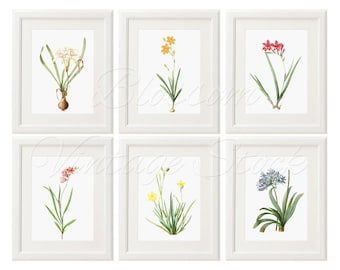 Botanical Printable Set, botany Print Set of 6 Flowers INSTANT DOWNLOAD Vintage Illustrations for Print 5x7, 8x10, 11x14 - 2416