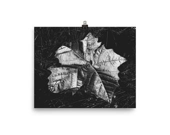 Sycamore leaf, Digital print, Digital art, Nature art, Nature print