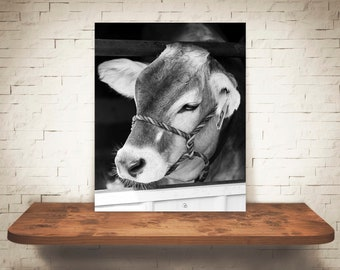 Brown Swiss Cow Photograph - Fine Art Print - Black White Photography - Wall Art Decor -  Farm Pictures - Farmhouse Decor - Cows - Country