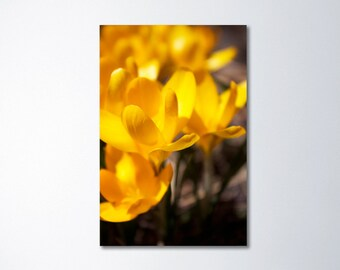 Spring Art, Yellow Art, Spring Flowers, Large Vertical Art, Floral Canvas Art, Large Art, Spring Photography, Yellow Flowers, Crocuses