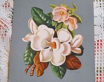 IVORY & PINK MAGNOLIA Litho Print on Dove Gray Stock, Floral Bouquet to Frame, Vintage 1950s Signed Botanical Art, Barkcloth Era 8 x 10