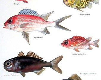 Fish Print - Roughie, Pinecone Fish, Squirrelfish, Whalefish 1984 Vintage Fish Book Plate Colored