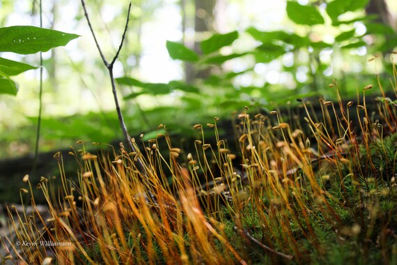 Mossy Uprising—Photo Print or Canvas Gallery Wrap