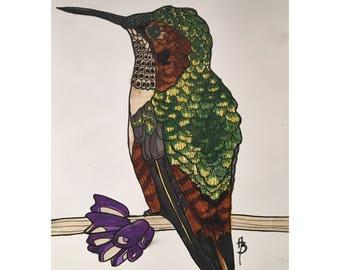 Allen's Hummingbird Print
