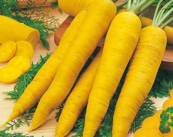 Carrot Seeds LOBERESHER YELLOW Heirloom Vegetable Seeds Late / 2015