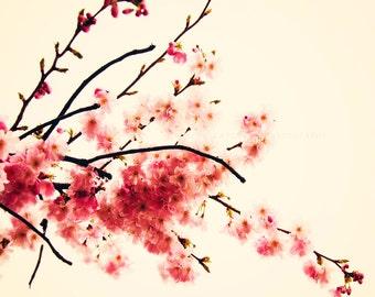 Nature Photography, Cherry Blossoms, Blush Pink, Wall Art Prints - Spring Photograph, Sakura Art, Nursery Decor, Botanical Art, Floral Home