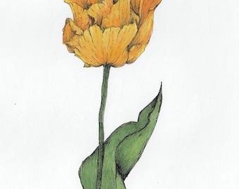 ORIGINAL yellow tulip flower