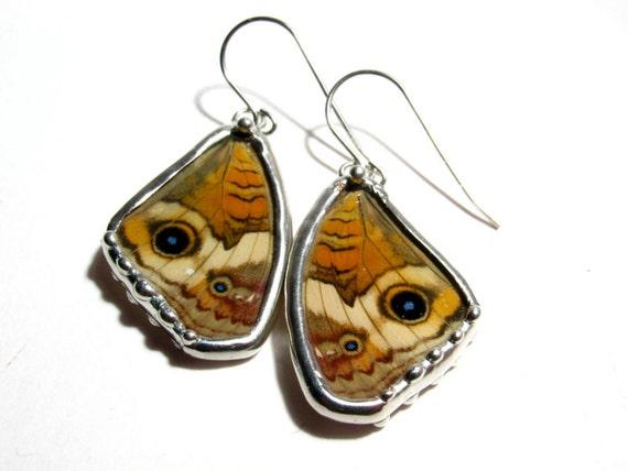 Junonia Coenia / Real Handmade Buckeye Butterfly Wing Earrings