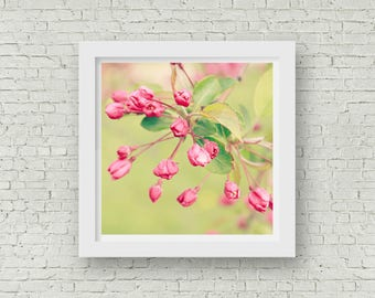 Cherry Blossoms Photography - Digital Download - Cherry Blossom Print - Cherry Blossoms Spring Printable Home Decor