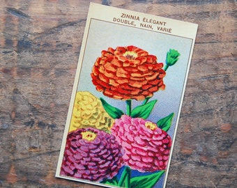 Original Vintage Flower Seed Label, Lithograph, French, Zinnia, New Old Stock
