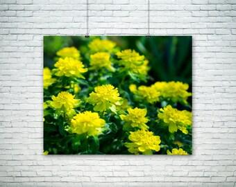Nature Photography - Yellow Pillows - Flower Art - Home Decor - Fall Wall Art - Yellow - Chartreuse - Green - Vivid - Bright