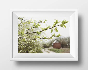 Country Picture, Spring Photo, Digital Download, Blossom Wall Art, Spring Orchard, Farmhouse Photo, Rustic Decor, Green and Brown, Instant