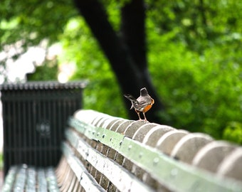 Photograph Bird on Bench in Central Park