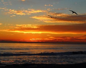 Sea Gulls at Sunset