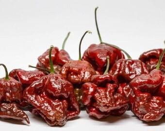 Chocolate Trinidad Scorpion Chile Seeds -  Summer 2017 Crop  ORGANICALLY GROWN