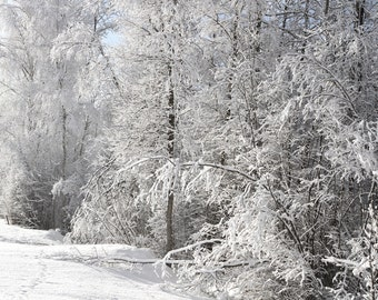 Winter morning in Vidzeme. Latvia.. Photo size 30 x 21cm