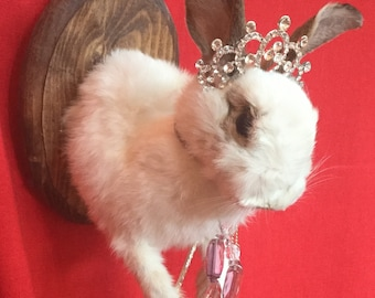 H-19 Taxidermy Bunny Rabbit Head Mount Princess cottontail display wall hanging