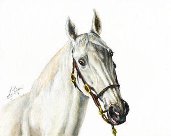 Original Oil HORSE Portrait Painting PONY Artwork from Artist SIGNED Gray Stallion Grey
