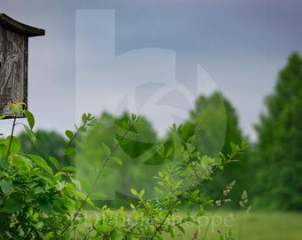 Bat House in the Field   Landscape Photo Art   Nature Gift   Fine Art Photography   Personalization   BDPhotoShoppe   Home Office Decor