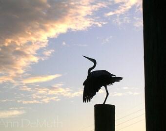 Photography, Great Blue Heron, St. Augustine FL, Pier, blue sky, yellow white clouds, Fine Art Print, Home Decor, 5x7, 8x10, Wall Art