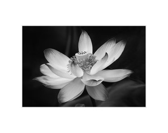 Flower Art, Lotus Blossom, Flowers Black and White, Floral Print Wall Art, Leaf Photography, Floral Photography, Matted Print, Nature Photo