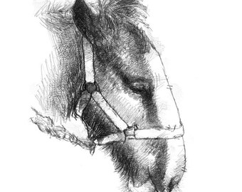 Shire foal | Limited edition fine art print from original drawing. Free shipping.