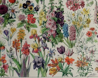 "Vintage print.1920's.FLOWERS of annual and biennial plants.61 species.Beautiful print.80 years old.Vintage illustration.12,1x9"" or 23x31cm."