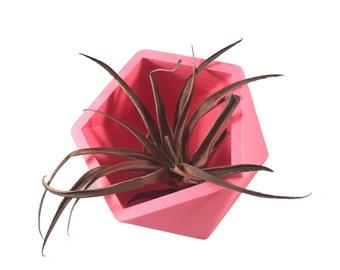 Geo Succulent Planter 3D Printed Vase, Air Planter