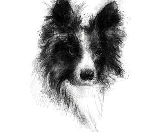 Collie sketch | Limited edition fine art print from original drawing. Free shipping.