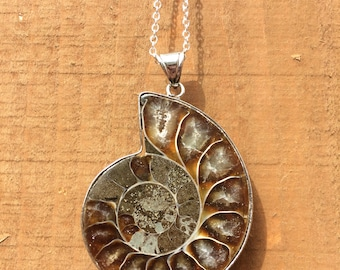 Fossil Ammonite Necklace, silver chain