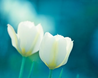 """Flower Photography - aqua decor blue white tulips print teal turquoise colorful modern floral wall photo 11x14, 8x10 Photograph, """"Charisma"""""""