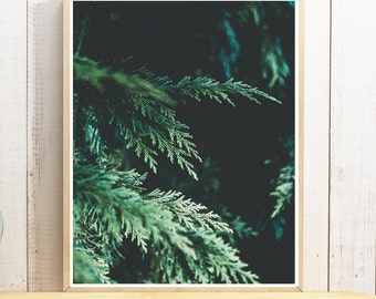 Winter. evergreen tree, nature print. Greenery, forest photography. Rustic, Scandinavian, modern, photo, poster print. Instant Download.