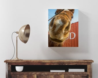 Horse Print, Horse Portrait, Horse Photography, Horse Head, Horse Photo, Photography Print, Extra Large Wall Art, Huge Canvas Art