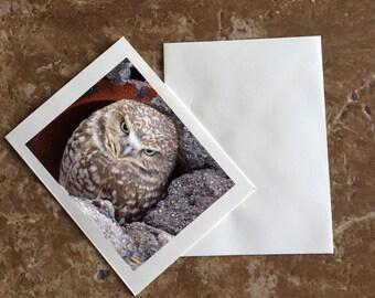 Burrowing Owl Angry Bird Blank Notecard