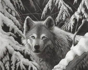 "Giclee fine art print of original ""Night Wolf"" drawing, wolf, wolf art, wolf drawings, wolf paintings, winter wolf, snow on fir trees"