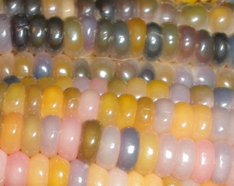 GLASS GEM CORN - 50+ Seeds - Rare - Heirloom - Organic - Open pollinated - Edible