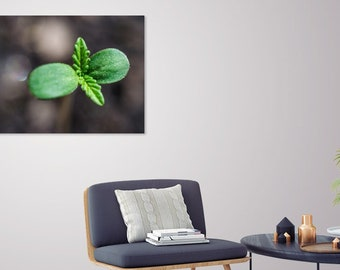 Weed Sprout Art Print, Metal or Canvas_Natural Macro Pot Leaf_Designs by Nature_Green Leaf_Herb Leaf Photo_Stoner Wall Art, Cannabis Sprout