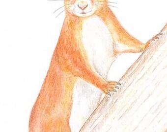 Red Squirrel - Birthday Card