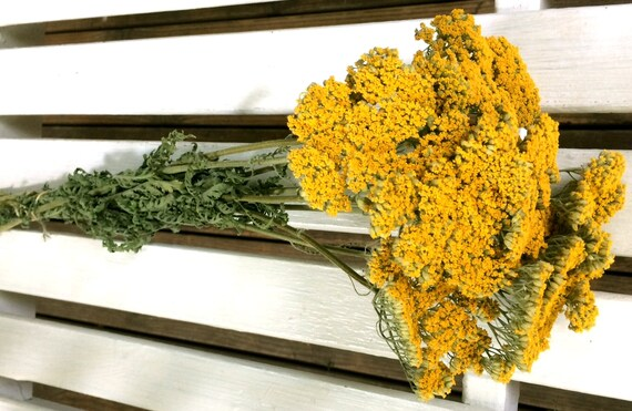 Dried flowers bunch yellowgold yarrow flowers natural mightylinksfo