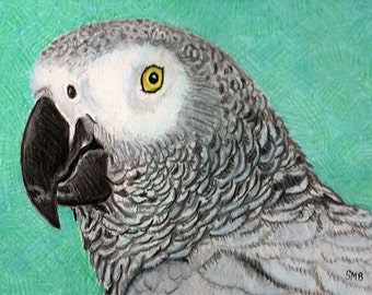 African Grey Portrait Print from an Original Color Pencil Drawing by Sally Blanchard
