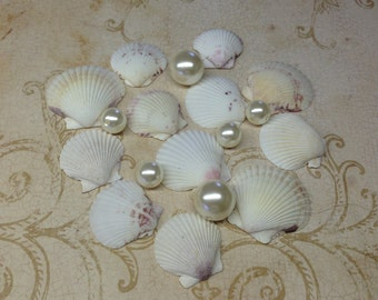 12 White Scallops - Collection of White Scallop Shells From the Gulf of Mexico - Craft Ready White Seashells - White Shells for Weddings