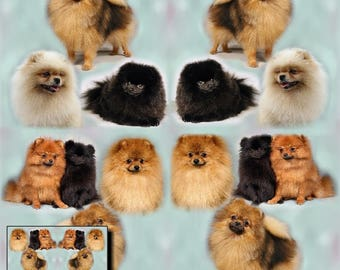 Pomeranian Dog Gift Wrapping Paper with matching Gift Card