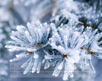 Alpine Frost Essential Fragrance Oil