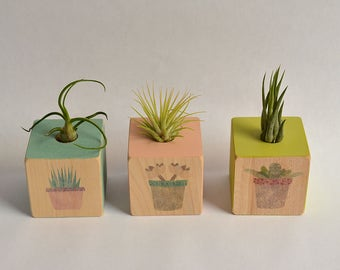 NEW Small Air Planter Cube, Air Plant Holder. Air Plant Container, Planter, Mother's Day, Springtime