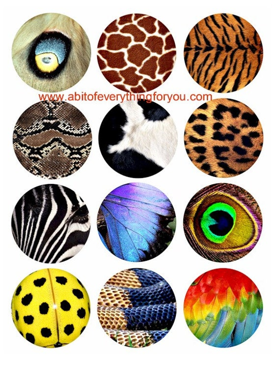"animals patterns textures clip art digital download collage sheet 2.5"" inch circles graphics images craft printables"