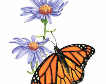Monarch Butterfly Blank Inside Greeting Cards, Notecards, Set of 5, with Envelopes, A2 Size