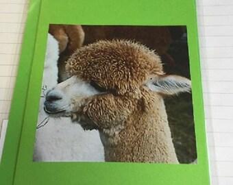 Alpaca Hand Made Greeting Cards - Set of 6